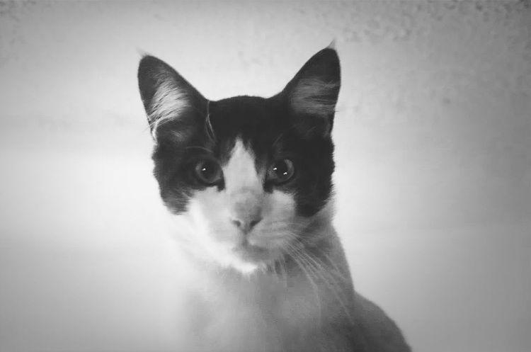 Damien. The Monkeys Cat Evil Family Cat