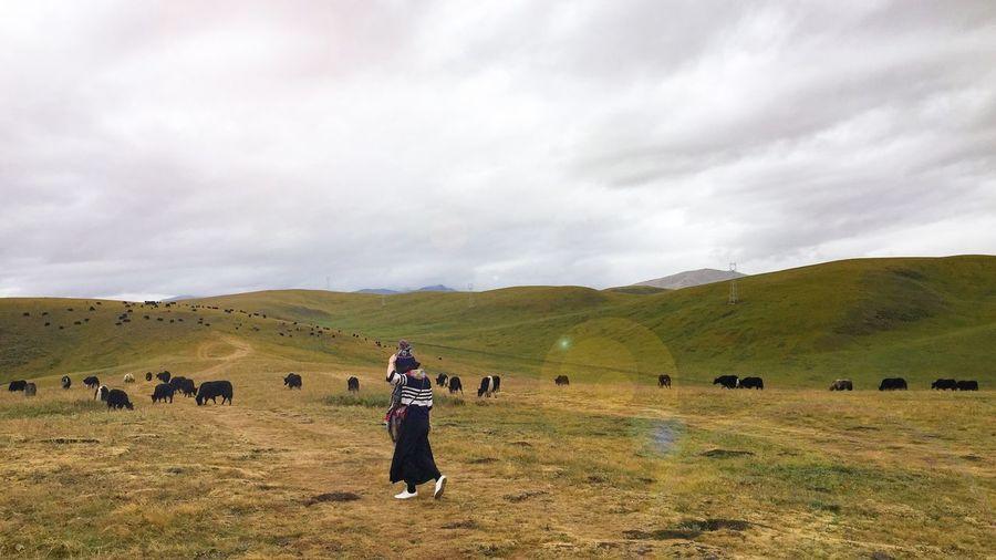 Rear view of woman walking towards cows grazing on field
