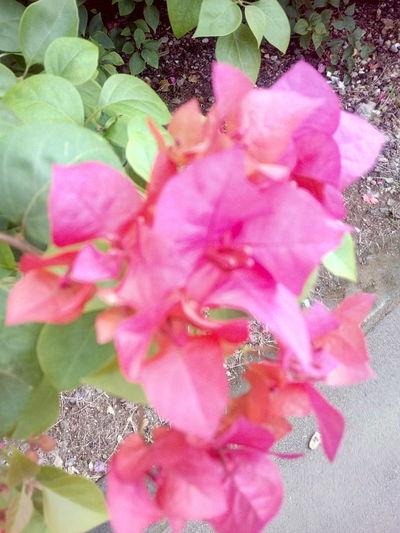 PaperFlowers Bunga Kertas