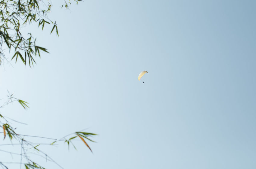 Jump into the bamboo forest ! Adventure Banboo Clear Sky Extreme Sports Flying Leisure Activity Lifestyles Low Angle View Nature Parachute Paragliding Shek O