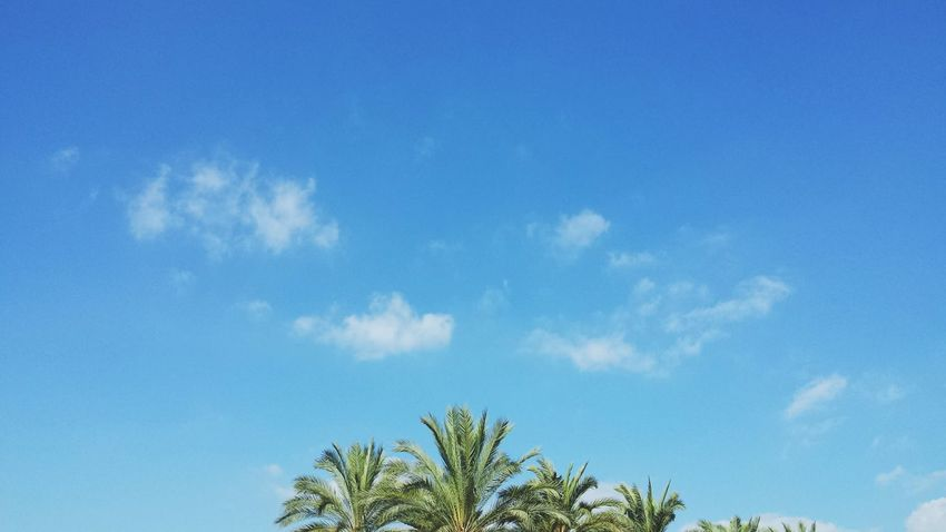 Sky Cloud - Sky Blue Palm Tree Nature Tree Day Growth Beauty In Nature Close-up SPAIN The Week On EyeEm