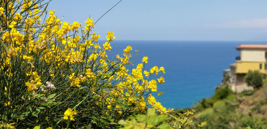 Yellow flowering plants by sea against sky