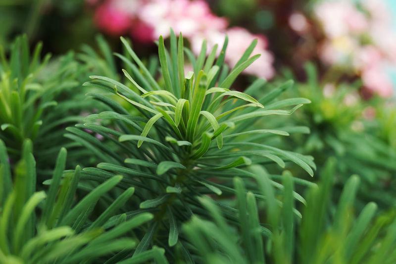 Macro Green Plants Macro_collection макро Nature Flowers,Plants & Garden Garden сад