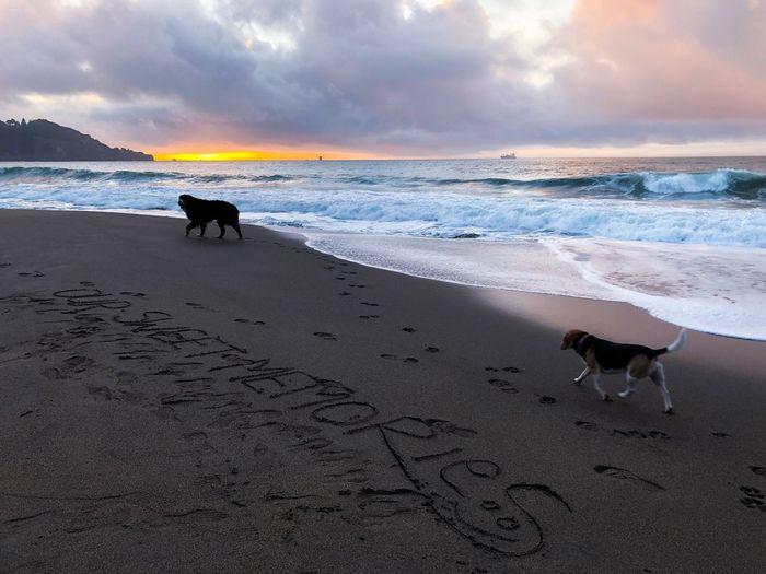 San Francisco - 004 Memories Beach Sand Dog Pets Nature Sky Sunset Cloud - Sky Beauty In Nature Outdoors San Francisco EyeEm Selects EyeEmNewHere EyeEm Gallery
