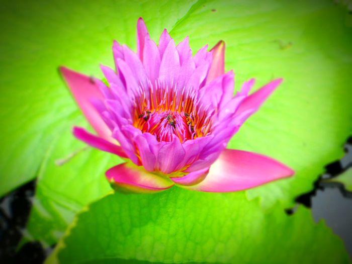 Lotus, Hanging Out Taking Photos Thailand_allshots EyeEm Thailand .