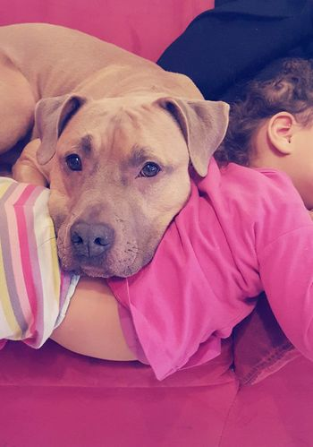 Dogs And Kids Kids And Pets Love Friendship RePicture Friendship Brothers And Sisters Sharing A Moment Relaxing Time Amstaff Beware Of Dog Ootd Allpinkeverything Little Girl Not So Little Anymore Pet Portraits This Is Family
