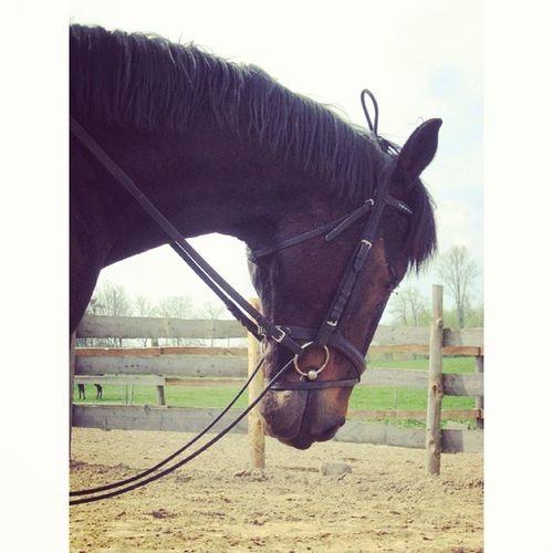 M ój Drugi M ąż Horse my love stable polishgirl like likes like4like follow