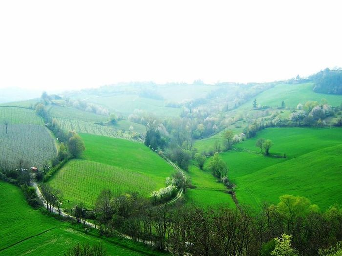 Le dolci e verdi colline parmensi Landscape Agriculture Environment Rural Scene Field Land Crop  Plant Green Color Growth Sky Farm Scenics - Nature Nature Beauty In Nature Tranquility Hill Tree Morning Social Issues