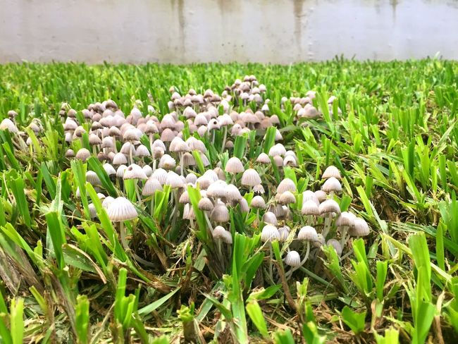 Grass Mushroom Green Color Plant