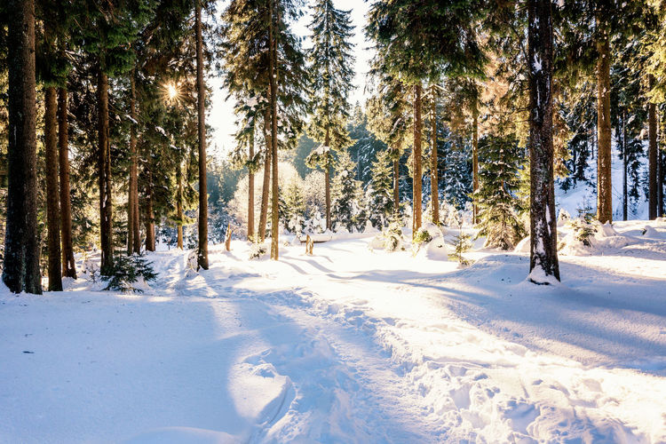 Snow Tree Winter Cold Temperature Plant Land Covering White Color Beauty In Nature Tranquility Scenics - Nature Nature Field Tranquil Scene Day No People Non-urban Scene Forest Sunlight