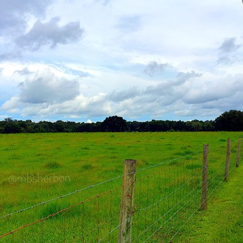 Florida Wideopenspaces Nature Landscape Field Pasture Clouds And Sky Backroads Farm