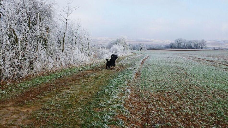 Spaziergang mit Hund 2