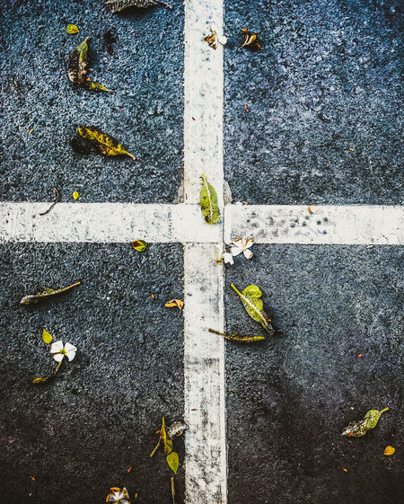 Asphalt Autumn Change City Day Directly Above Dividing Line High Angle View Leaf Leaves Marking Nature No People Outdoors Plant Part Road Road Marking Sign Street Symbol Transportation Yellow