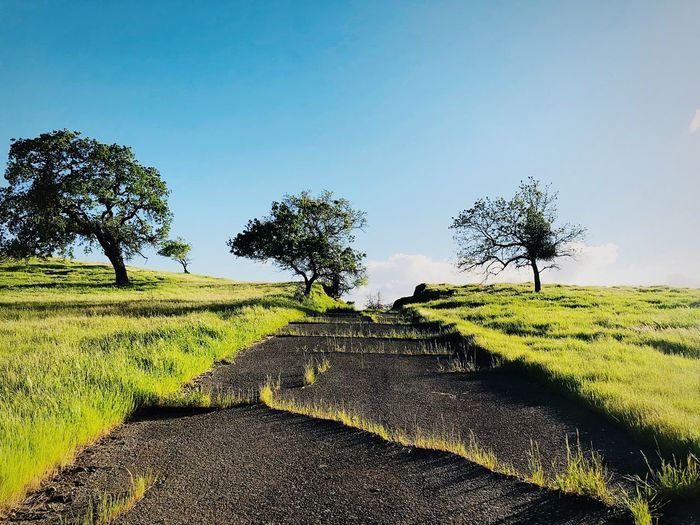 Nature reclaiming Nature Takes It Back Abandoned Places Old Road Plant Sky Growth Landscape Tranquility Beauty In Nature Tree Nature Land Field Tranquil Scene Day Environment No People Scenics - Nature Sunlight Rural Scene Outdoors