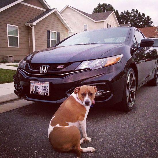 My Bitches Fg4 Civicsi Civic Pitmix Pitsofinsta Pibbles Pitbullvixens VTech Honda Hondacivicsi