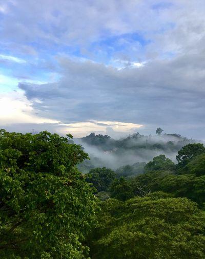 Bosquemagico Cofre De Perote Veracruz