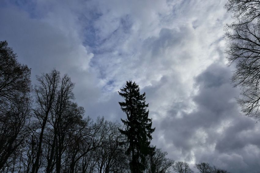 Clouds And Sky Weather Cold Temperature Tree Sky Outdoors Beauty In Nature Nature Outdoors Photograpghy  StillLifePhotography Authentic Moments Dezember 2016 Stillleben Freshness Eyeemphotography Cold Days No People Sunset From My Point Of View