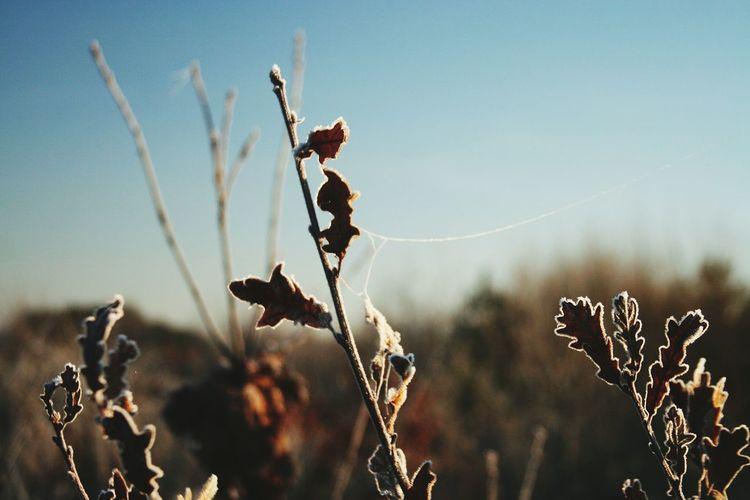 Frozen plants against sky