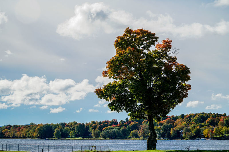 Autumn Autumn Colors Autumn Leaves Beauty In Nature Blue Blue Water Canada Cloud - Sky Cloudy Day Green Landscape Light And Shadow Nature No People Outdoors River Sky Sun Beams Sunny Tree Tree Trees Water
