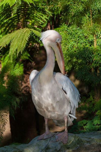 Pelican with green foilage background Animal Themes Animal Wildlife Animals In The Wild Avian Beak Beauty In Nature Bill Bird Close-up Day Fethers Fish Eater Growth Nature No People One Animal Outdoors Pelican Perching Plant Pouch Water Water Bird First Eyeem Photo