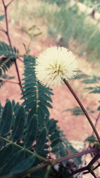Sahara Desert Leaf 🍂 Algeria Adrar