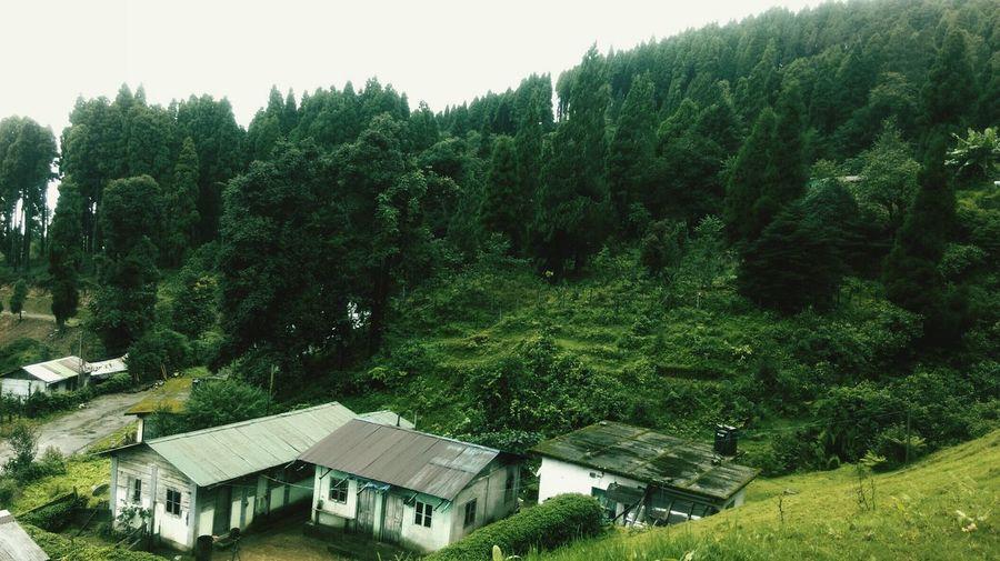 Nautre Green Earth Peace Awsmness