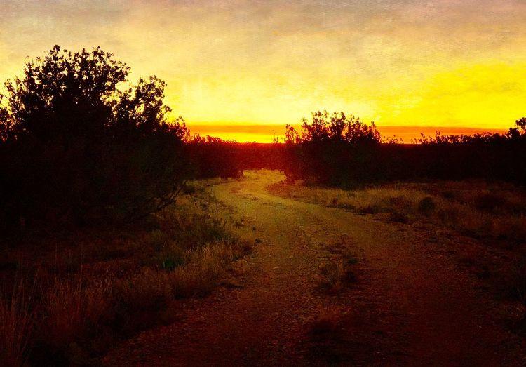 """""""Dawn Paints"""