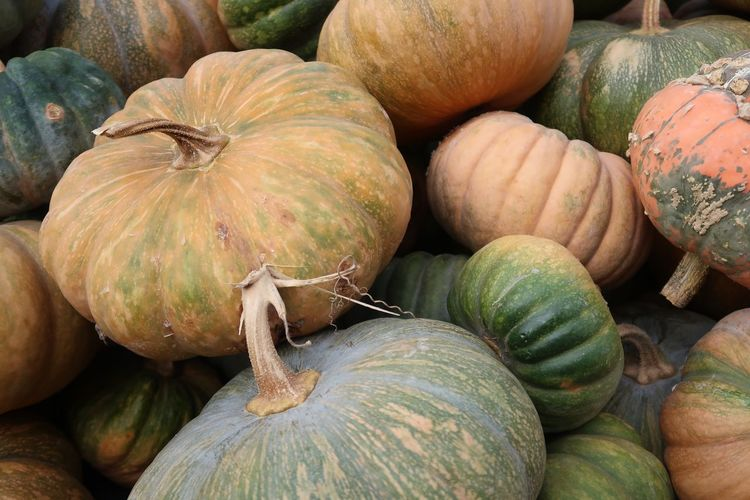 Halloween Kürbis Pumpkin Food And Drink Food Freshness Healthy Eating Wellbeing Backgrounds Abundance Vegetable Pumpkin Full Frame High Angle View No People Market Market Stall Large Group Of Objects For Sale Close-up Still Life Day Retail