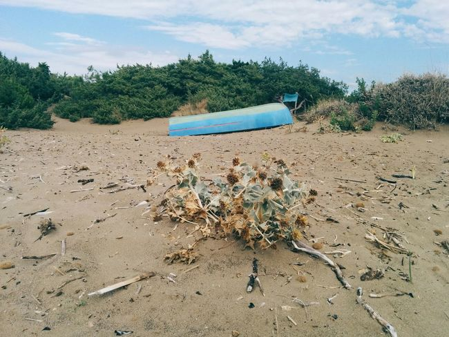Rosmarin beach Sunshine Sand Blue Boat