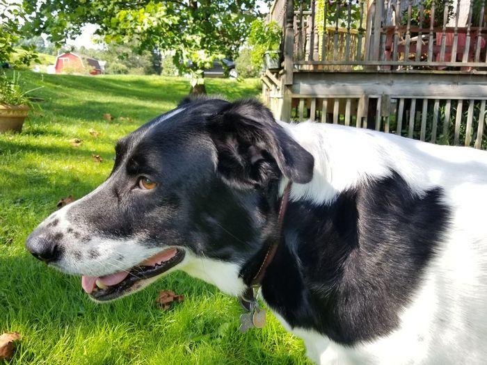 Bella Pets Dog