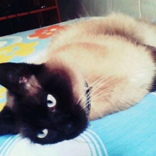 """""""Que cara chato, nem dormir na cama dele eu consigo :o Boatarde Roubouminhacama Thor  Olhos pausaprafoto wakeupthor clean catgram instapet"""