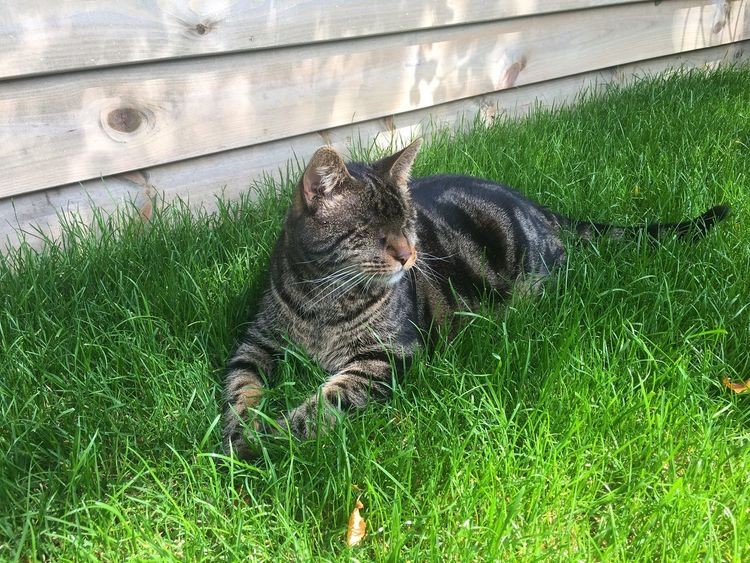 BlindCat Domestic Cat Pets Animal Themes Domestic Animals Feline Grass Mammal Cat High Angle View Lying Down Nature No People