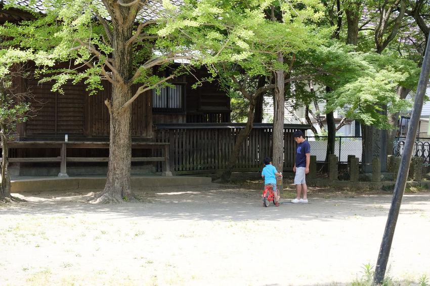 Fujifilm FUJIFILM X-T2 Fujifilm_xseries Ground Ichikawa Japan Japan Photography Japanese Scenery Tree X-t2 市川 手児奈霊神堂 日本