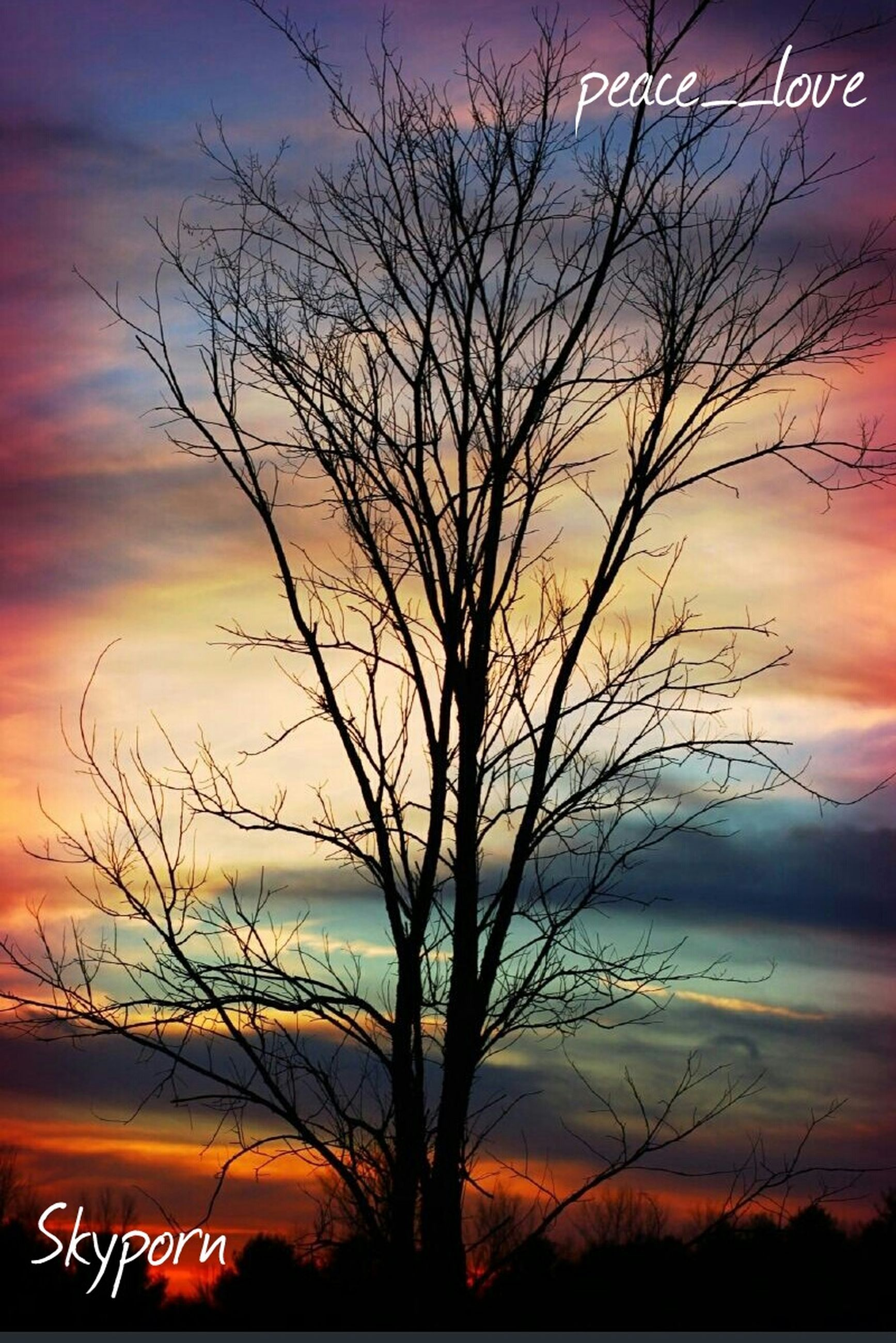 sunset, silhouette, bare tree, orange color, sky, tranquility, scenics, beauty in nature, tranquil scene, tree, branch, nature, dramatic sky, cloud - sky, idyllic, moody sky, majestic, outdoors, dusk, romantic sky