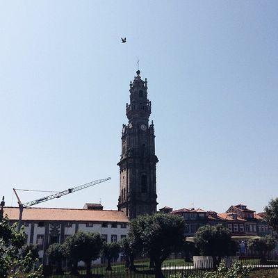 Torredosclerigos Porto Portugal Pajaro pomba
