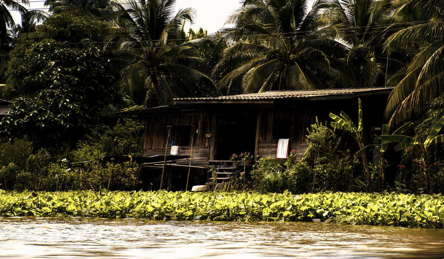 River hut Tree Architecture Built Structure Palm Tree Water Tropical Climate Nature No People Waterfront Building Outdoors Day Green Color House Thailand