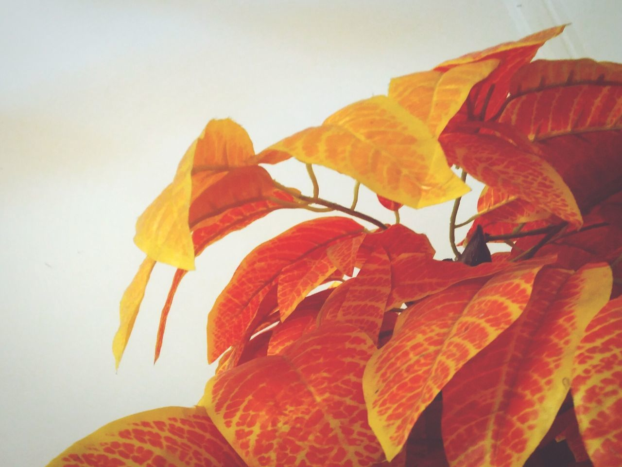 leaf, orange color, autumn, day, no people, nature, beauty in nature, outdoors, close-up, clear sky, sky