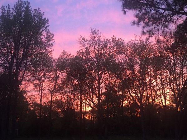 Sunset yesterday😍😍😍💫✨🌳☁️💖💙💛💕
