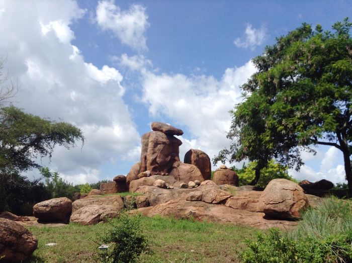 Hi Africa Jungle