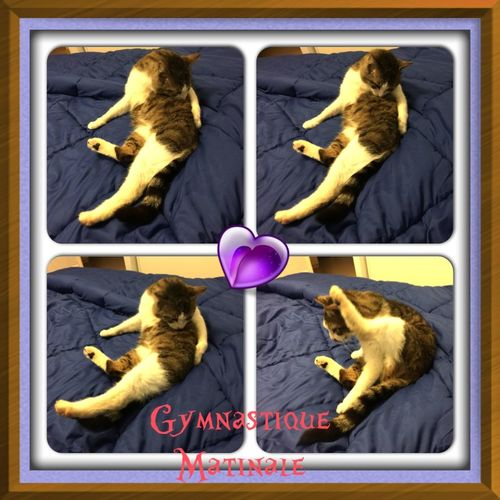 GYMNASTIQUE DE MIMINE 😽😺👍 Mon Ami Le Chat Cat♡ Chat Cats Cat CHATFIE Catfie Humour