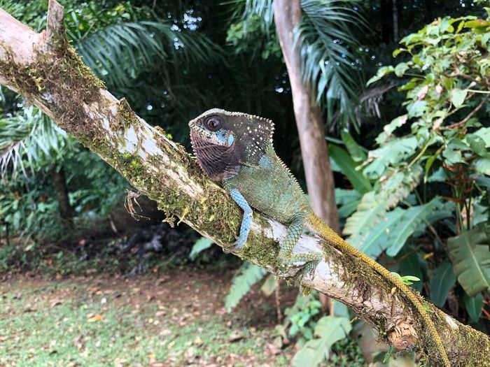 Close-up of lizard on tree in forest
