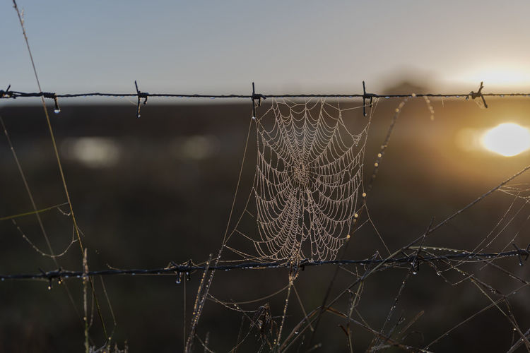Close-up of spider web on fence against sky during sunset
