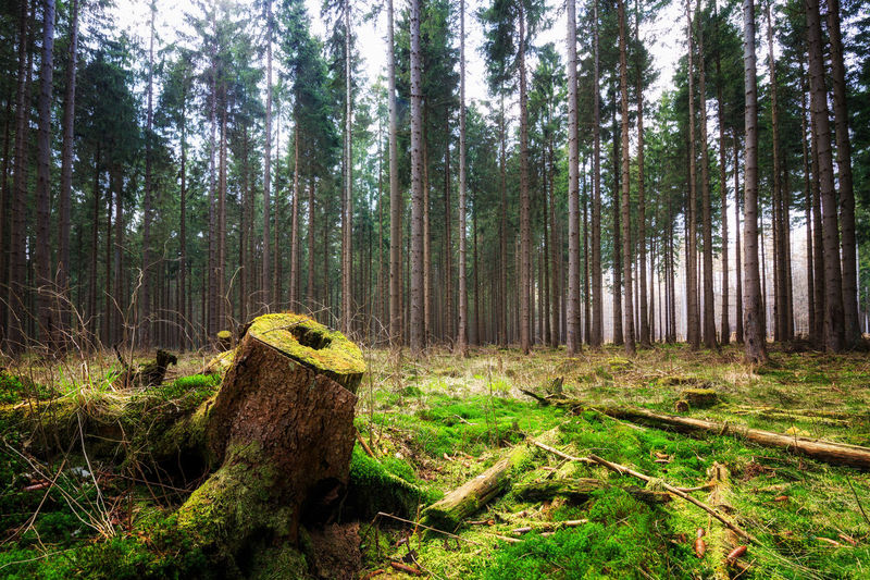 Wanderlust Bark Beauty In Nature Day Environment Forest Grass Growth Land Nature No People Non-urban Scene Outdoors Plant Scenics - Nature Tranquil Scene Tranquility Tree Tree Trunk Trunk Wald Walden Wood Wood - Material WoodLand