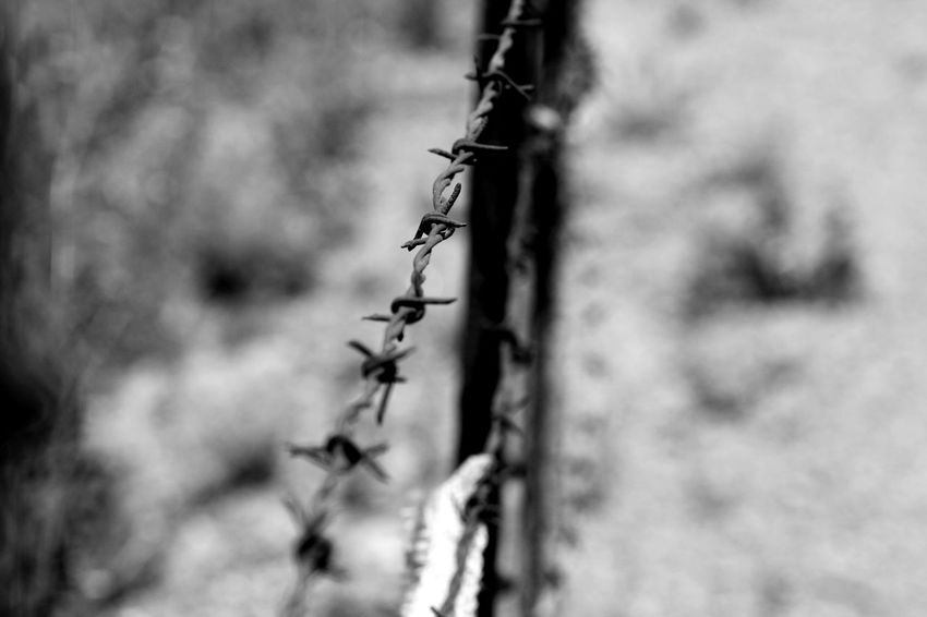 B&W shot of a decrepit barbed wire fence. Close-up Day Focus On Foreground Nature No People Outdoors Selective Focus