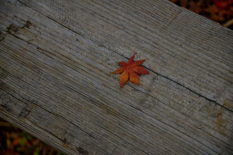 High angle view of maple leaf on wooden table