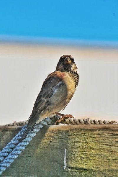 Birds Animal Themes Animal Animal Wildlife Vertebrate One Animal Nature Bird Water Beach Sunlight Sea Perching