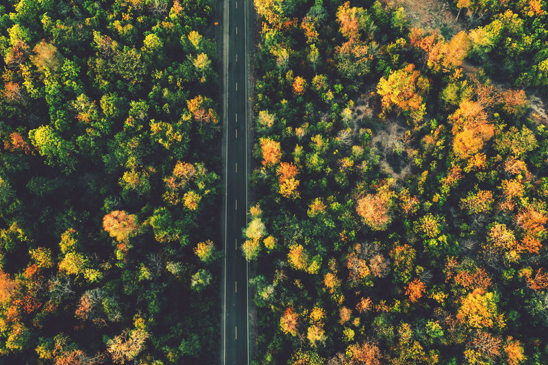 top view road with colorful forest in countryside Plant Beauty In Nature Growth Outdoors Backgrounds Full Frame High Angle View Land Tree Day Freshness Nature No People Tranquility Yellow Forest Landscape Top View Drone  Autumn Orange Green Rural Road Environment