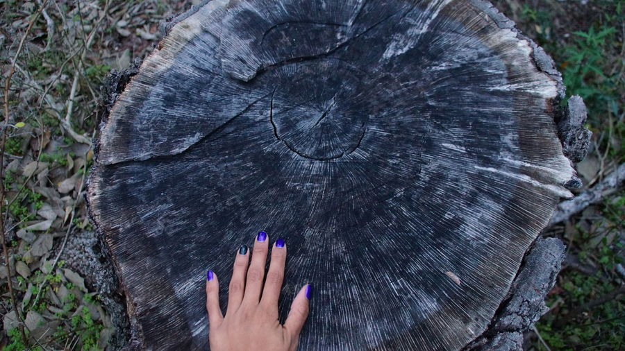 Cropped hand of woman touching tree stump