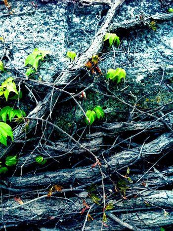 New Life Rebirth The Press - Treasure Spirit Of The Tree Enjoying Nature