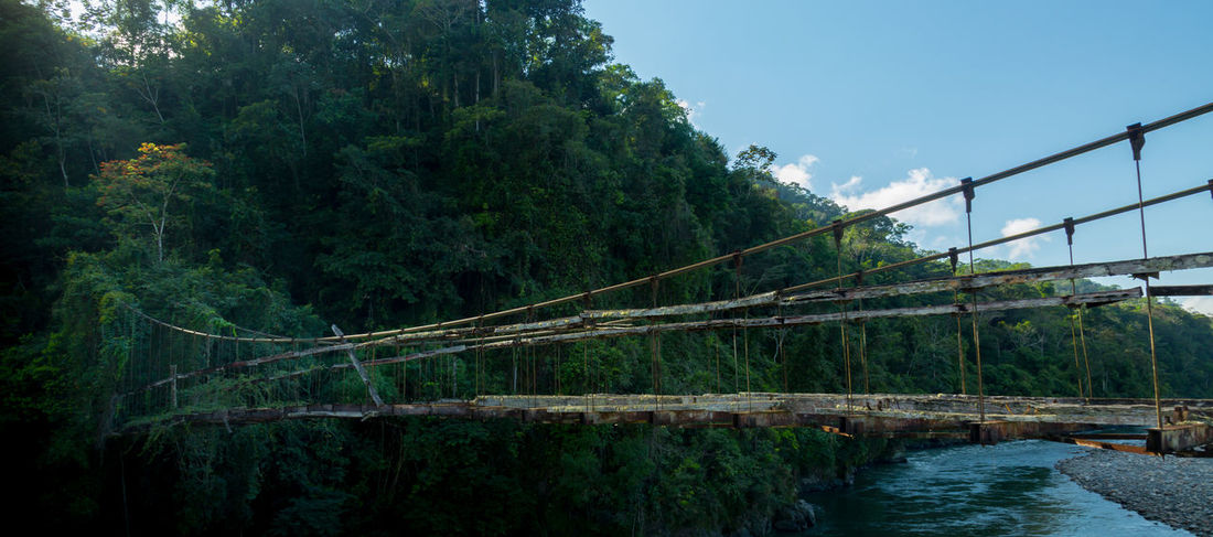 Dangerous Bridge into the Jungle Decay Falling Apart Nature Peru Trees Vines Amazon Blue Sky Bridge Dangerous Environment Forest Jungle Mysterious No People Outdoors Path To Nowhere Rainforest Rickety Ruined